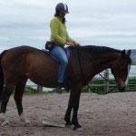 Gibt das Pferd im Genick nach, Click und gleichzeitig Nachgeben mit dem Zügel