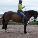 Bei Kontakt wird die Hand fixiert und wartet bis das Pferd nachgibt
