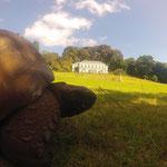 Haus des Governeurs und Jonathan, die wohl älteste Schildkröte der Welt