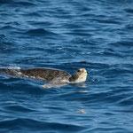 Schildkröten begrüssen uns