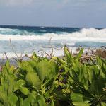 Dem Wind zugewandte Seite von Direction Island
