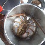 """Der """"gefährliche"""" Lobster"""
