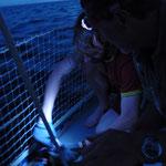 Action bei Einbruch der Dunkelheit: Fisch!