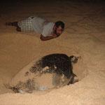Alex und die Schildkröte
