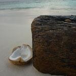 Eine Kokosnuss am Strand