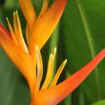 Farbenfrohes Tahiti II