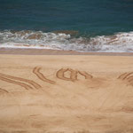 Schildkrötenspuren am Strand