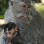 Im Monkey Forest in Ubud