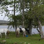 Besuch der Reitergruppe Highlands Unbrideld
