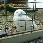 Harry Potters Hedwig?