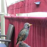 Was für eine interessante Vogelart! Kennt sich zufällig jemand aus? :-)