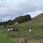 die Kühe sind auch los