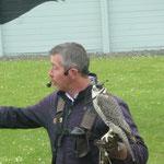 Ein Falke mit Hütchen