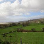 Grüne Hügel und Schafe! :-)