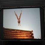 Auf der Fotoausstellung ist uns Ullu aus Ballyvaughan wiederbegegnet