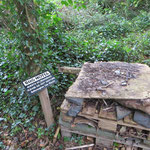 "Bug Hotel im ""Birds Hide"""