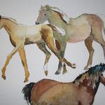 Pferdeaquarell