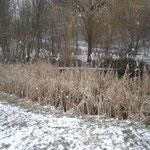 ist jetzt ein Biotop und sieht im Winter romatisch aus