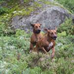 In Schweden können die Hunde fliegen