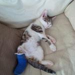Mira mit eingegipstem Bein