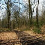 Forêt d'Andaine (Orne)