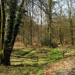 Forêt d'Andaine (Orne) : la fontaine du château qui daterait de la guerre de cent ans