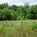 Tourbière de la Lande Mouton, hautes herbes