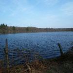 Forêt d'Andaine (Orne) : étang de l'Ermitage