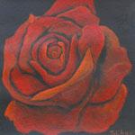 Rote Rose, 20 x 20 cm