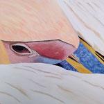 Pelikan, 40 x 40 cm