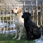 Brix und Broom 5 Monate