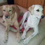 Hazel und Banja