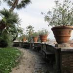 オリーブの鉢とアーチの庭。素晴らしいですよ。あちこちに監視カメラ。