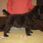 Gilbron Pride Sea Dog Skipper (boy, 2 motnths / puika, 2 mēneši)