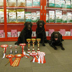 Nixie & Chilli & Master with their trophies and The Club TOP 2012 awards