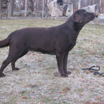Gilbron Pride Romantic Rocket - possible dam of a litter
