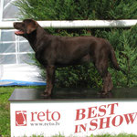 puppy BOB, puppy BIS-5, Reto national show 21.07.2012