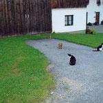 Ferienwohnung Meindlhof: Unsere Katzen
