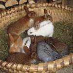 Ferienwohnung Meindlhof: Hasen