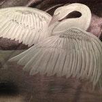 Cisne Amenizando