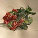 """""""Radieschen"""" Zeichnung Aquarell, 2019"""