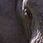 Karongwe GR - Elephant Eye