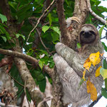 Manuel Antonio National Park (Costa Rica) - Three-toed Sloth © Stephan Stamm