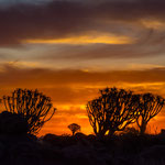Golden hour at the Quiver Tree Forest in Keetmanshoop (Namibia)     © Stephan Stamm
