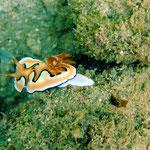 (Ningaloo Reef) © 2008