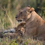 Close to Mummy it's best. Masai Mara National Reserve, Kenya     © Stephan Stamm
