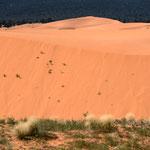 Coral Pink Sand Dunes State Park, Kanab (Utah, USA)     © Stephan Stamm