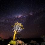 The Milky Way over the Quiver Tree Forest in Keetmanshoop (Namibia)     © Stephan Stamm