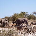 Adriane Porikys war im Etosha-Nationalpark, Namibia: »Hier gibt es Tiere, die man sonst nur aus dem Fernsehen kennt, live zu erleben. Sogar Löwen, wenn man Glück hat – oder Pech, je nachdem.«