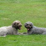 Lila und Bruno